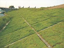 生态植生混凝土护坡