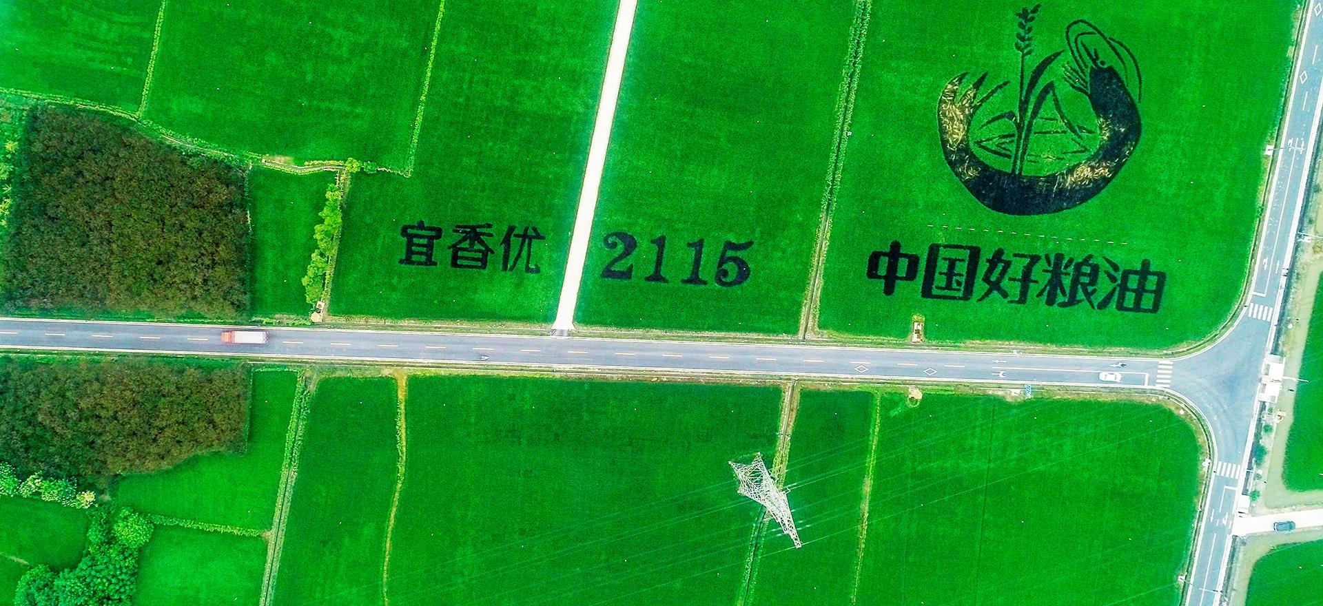 宜香優2115