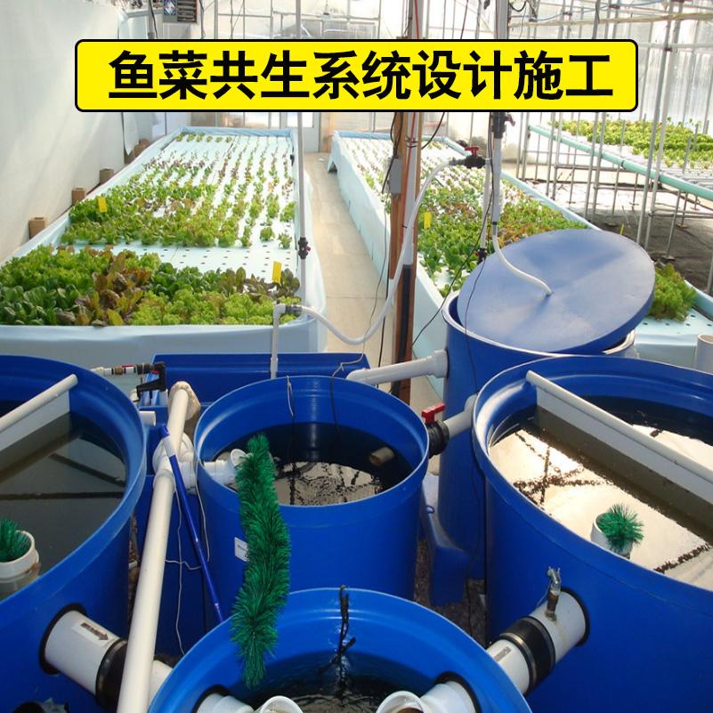 魚菜共生系統設計施工
