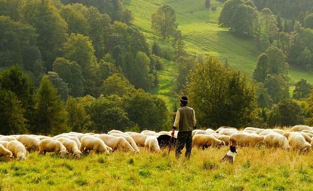 關于養羊的一些誤區,你注意到了嗎!