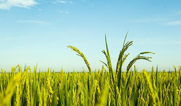 胜金米业:富硒大米的好处