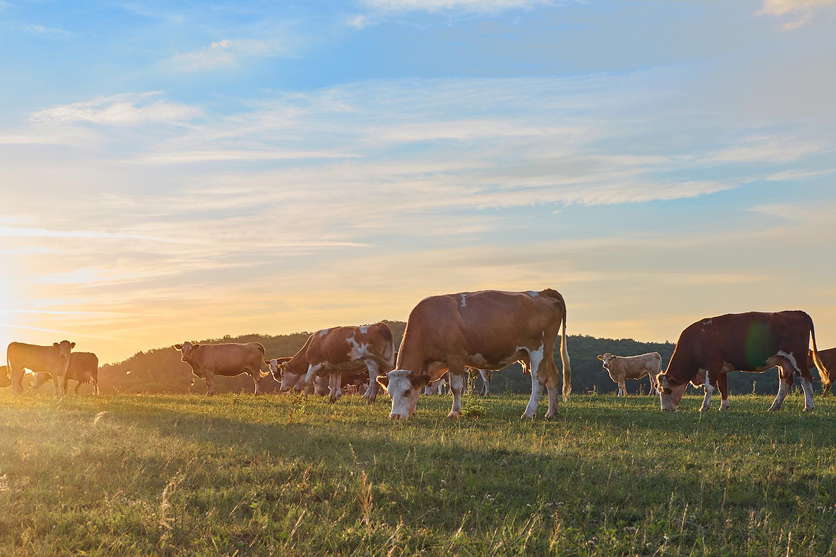 全球乳業市場未來五年展望