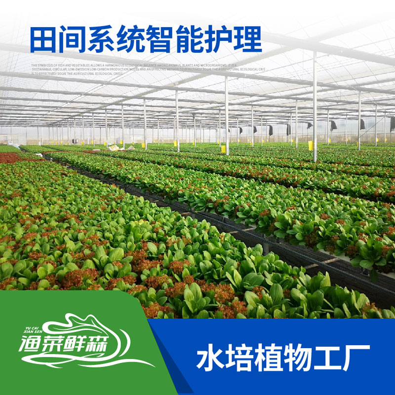 水培植物工廠