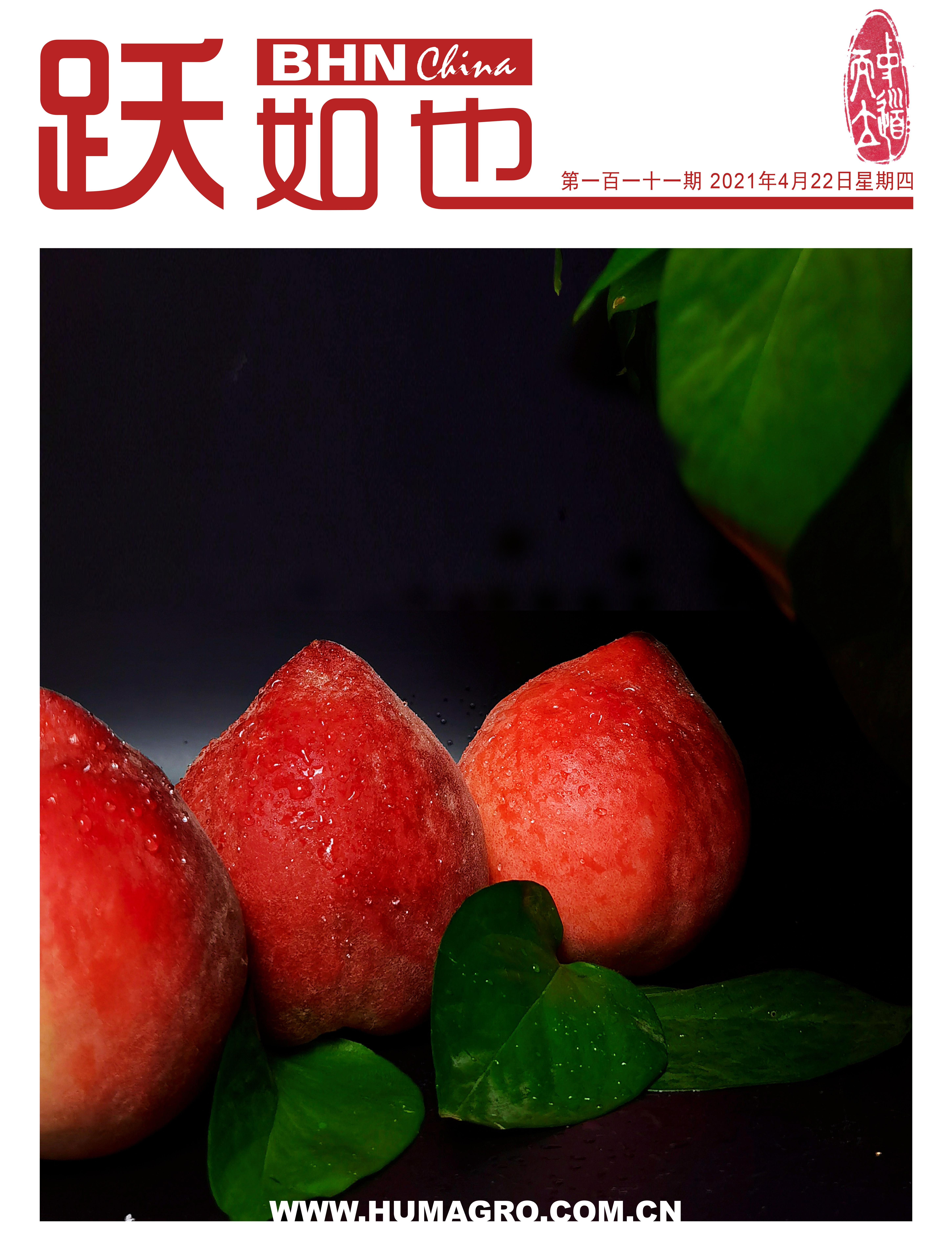 《跃如也》月刊第111期