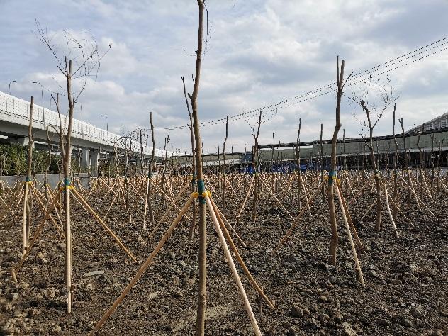 七寶鎮某地塊土地整理復墾(減)土壤檢測項目