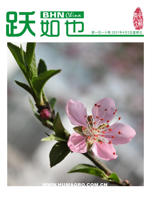 《跃如也》期刊第110期