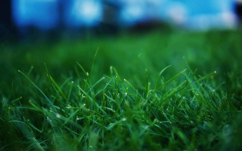 無邊的綠意  輕柔貼合肌膚